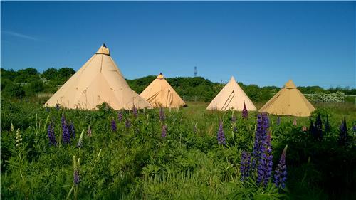 Lavvu - Danmarks største teltudstilling